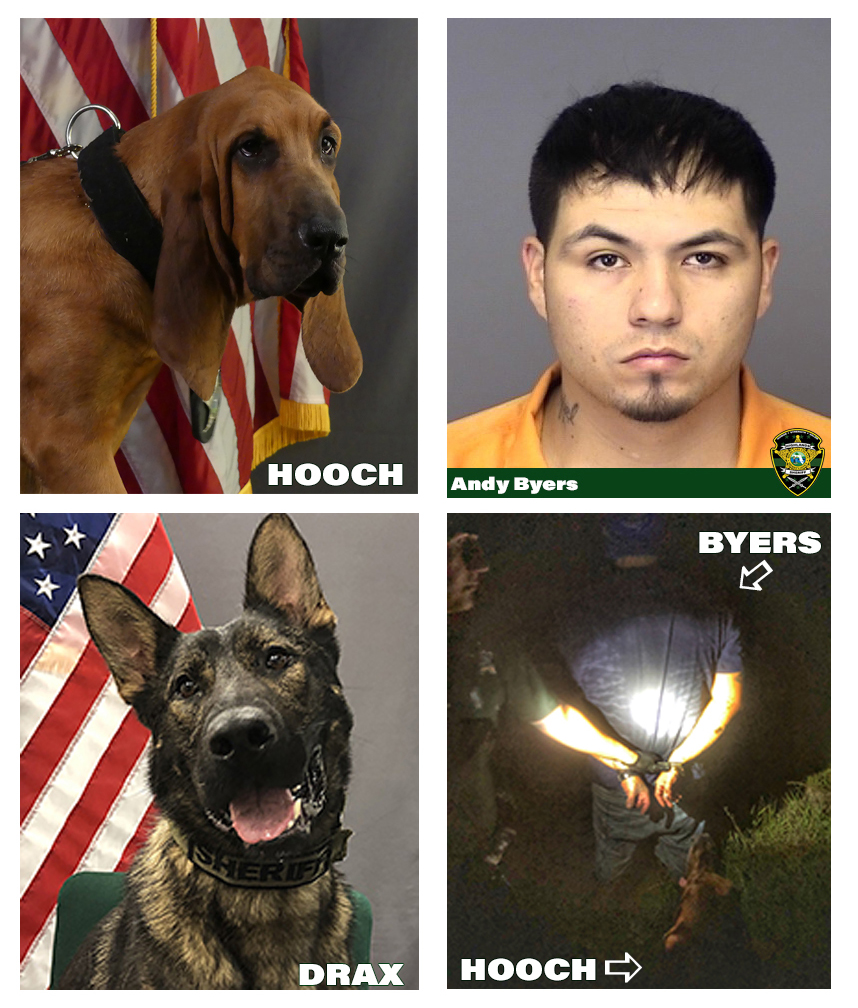 Images of K9 Hooch, K9 Drax, Andy Byers and the arrest