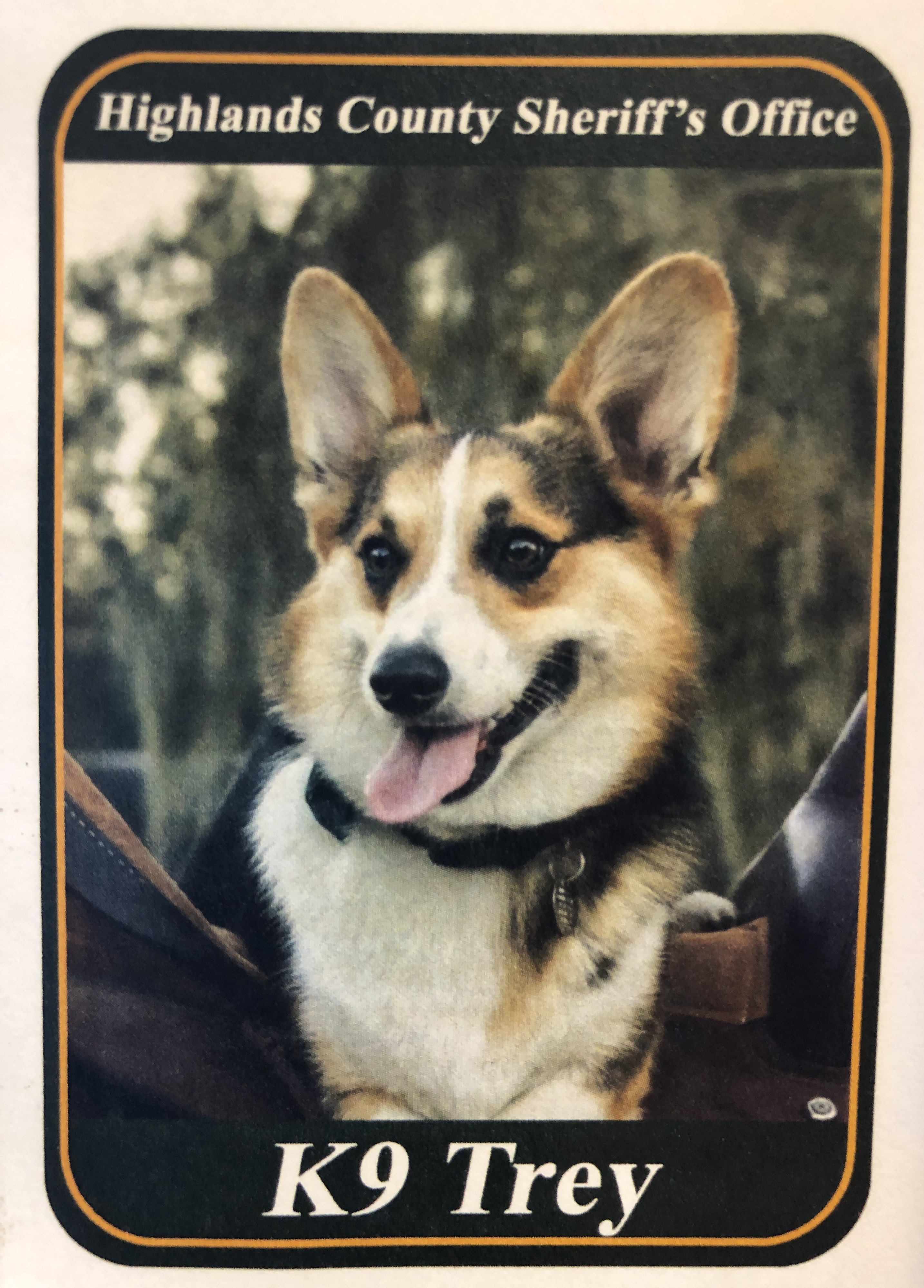 Therapy dog Trey trading card